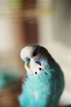 Bird and Mammal Grooming in Hicksville New York | Bird Girl Pet Services