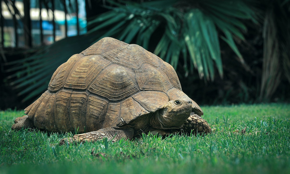 Tortoises Can Add, Can You?