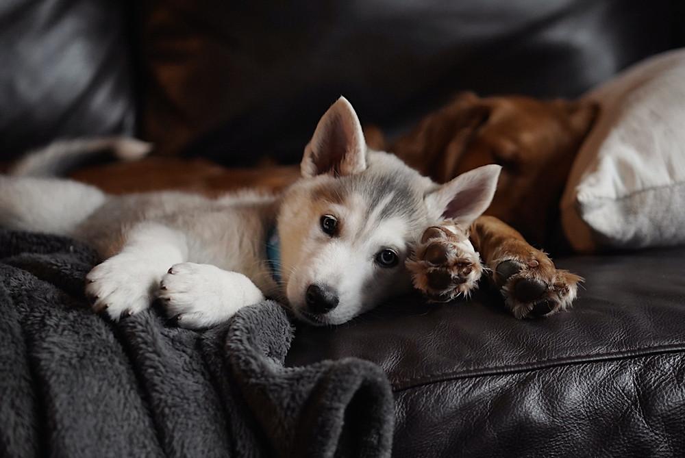 Puppy en tweede hond