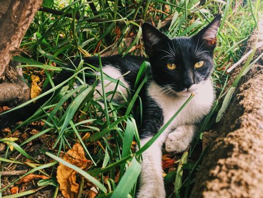 Les chats errants ne sont plus les bienvenus à Pointe-Lebel