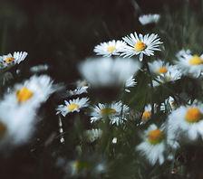 Image by Isabel Noschka