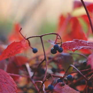 When Is the Best Time to Plant Trees, Shrubs and Perennials?