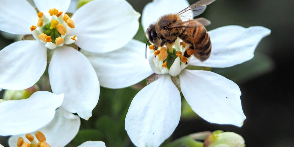 OCTOBER 2021 Beekeepers Forum