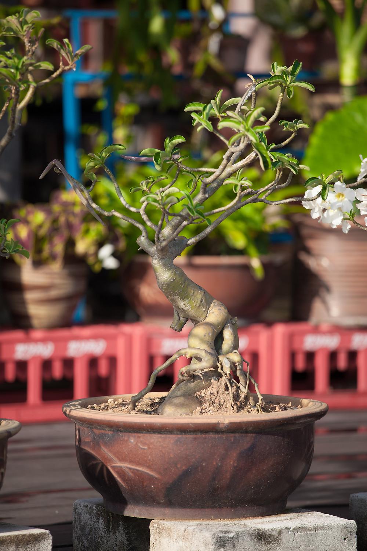 Eine Pflanze pflanzen als Ritual bei einer freien Trauung