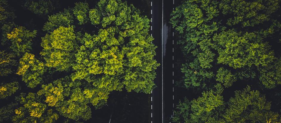 ¿Por qué la sostenibilidad es la nueva normalidad?
