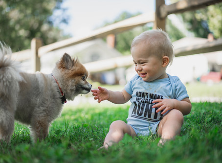 Bichos e crianças em casa: alérgicos podem ter?