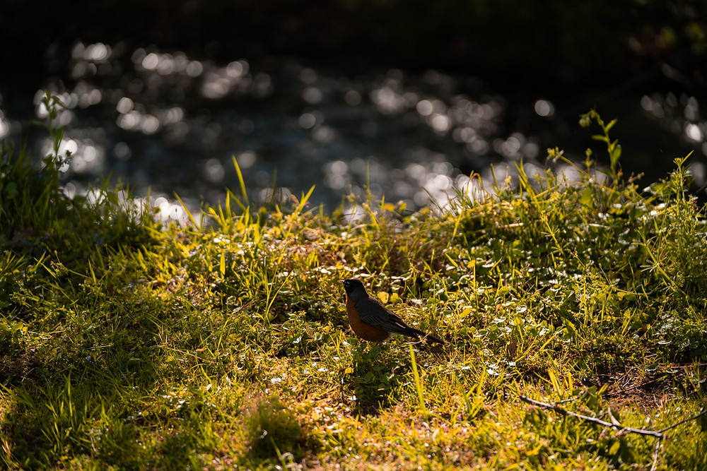 Ein Vogel auf einer Wiese am Bach