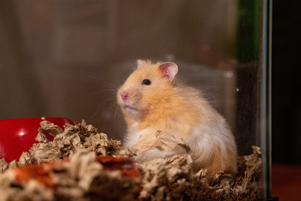 Small Animals & Vet Science