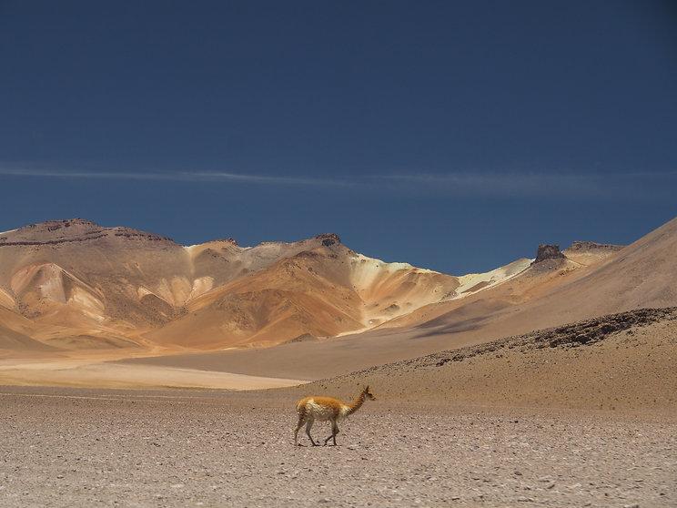 Grand Lipez depuis san pedro d'Atacama