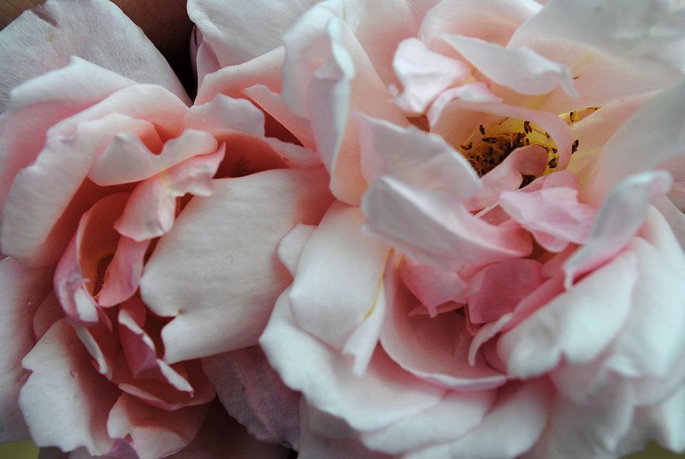 flowers silk Image by María Castillo