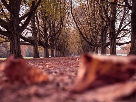 Öykü- Ayşen Beyza Lezgioğlu- Gidecek Olan