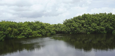 Image by The Tampa Bay Estuary Program