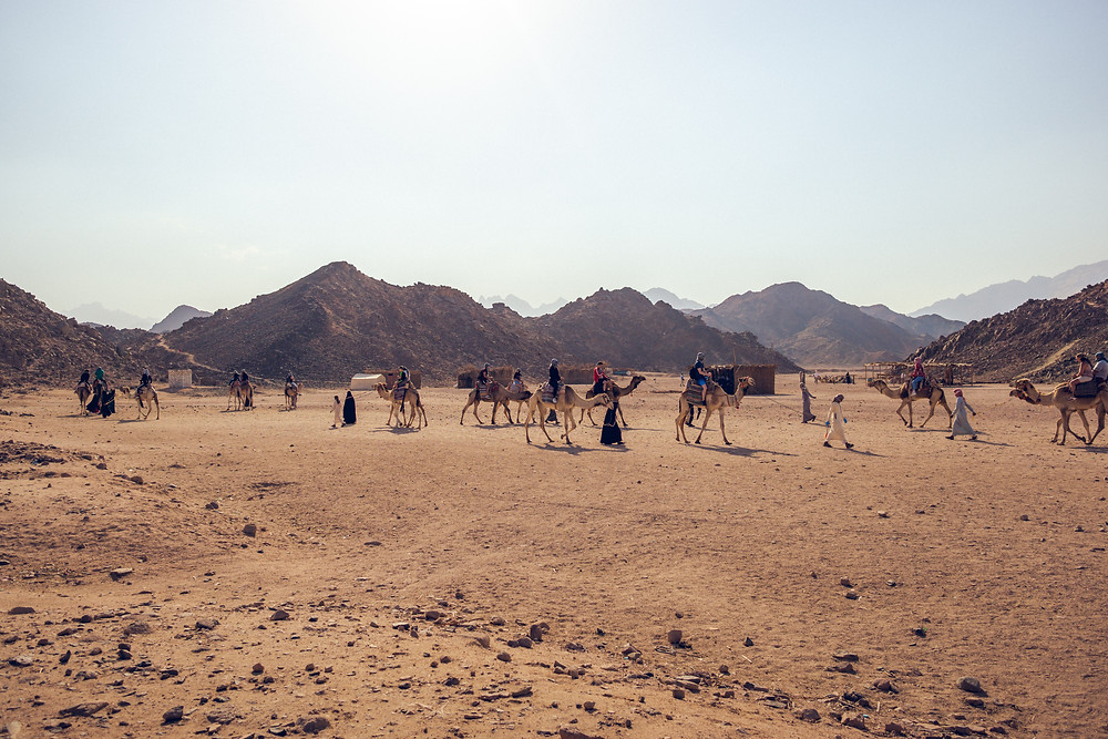Group of people riding camels and walking with camels in the desert