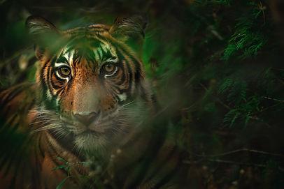 Image by Keyur Nandaniya