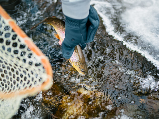 Full Fishing Closure Reinstated For Portion Of Ruby River