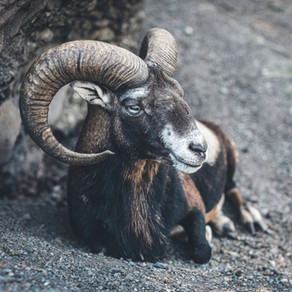Working with the Full Moon in Aries