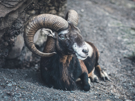 Activate and Liberate Your Desires: New Moon in Aries