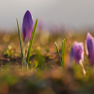 It's Time To Plant Spring-Blooming Bulbs!