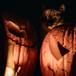 Halloween en toute sécurité pour nos compagnons.