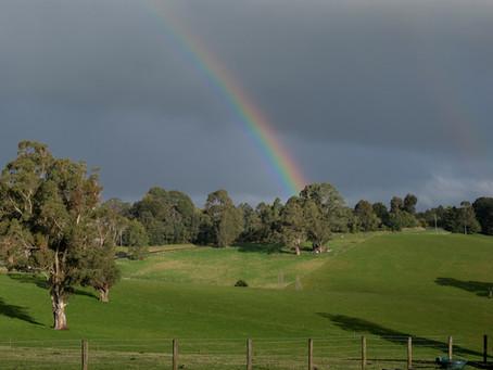 Regenbogen im Sturm