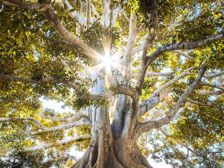 ארבעה עקרונות לבניית עץ ידע