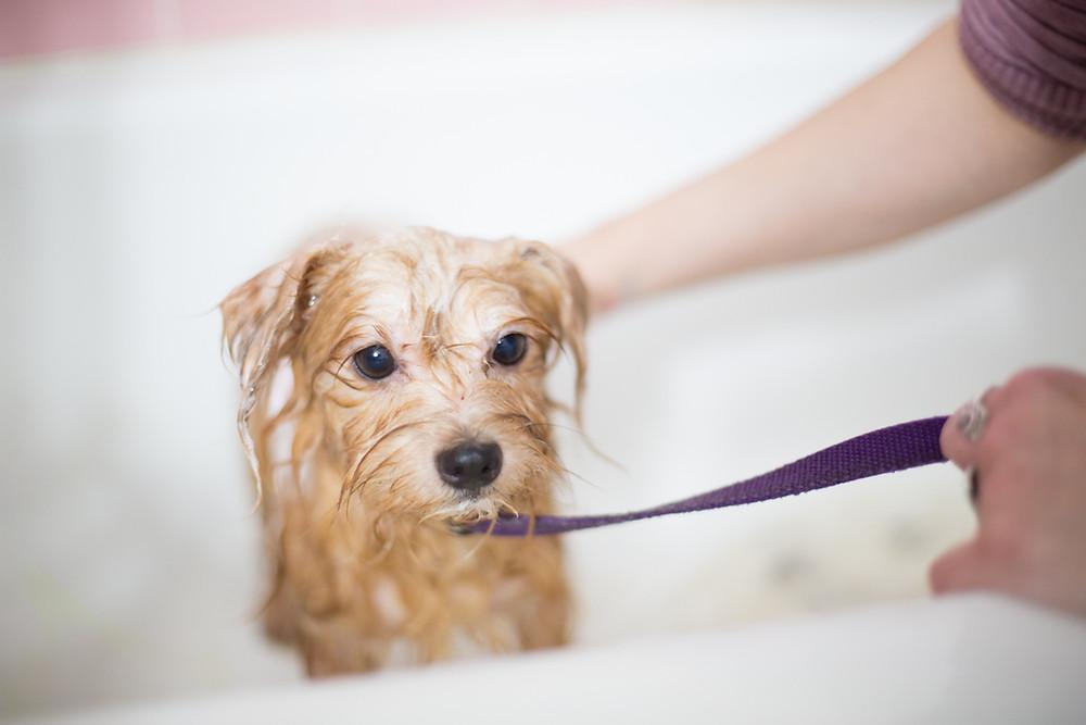 Como dar banho cachorro em casa?