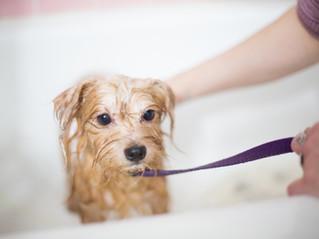 10 dicas essenciais para dar banho em casa