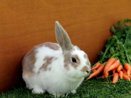 Kenali Makanan yang Tidak Boleh Dimakan Kelinci