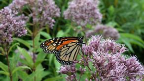 9/19 Native Plant & Pollinator Fair