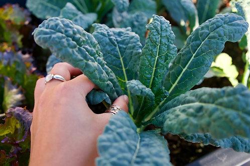 Plant Sale: Kale