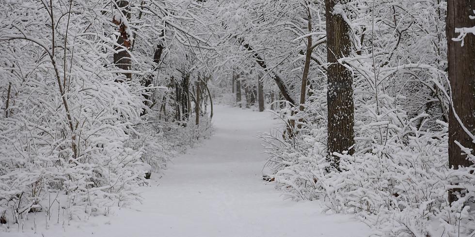 Winter Hiking for Kids: Creating Memories