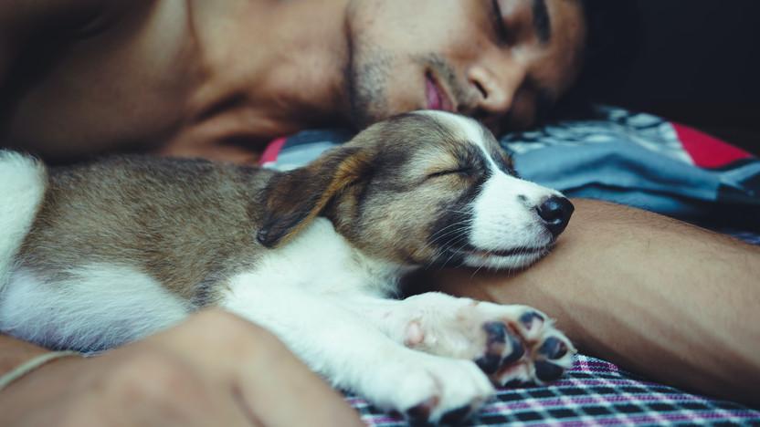 Life Performance Blog: The Power Of Sleep