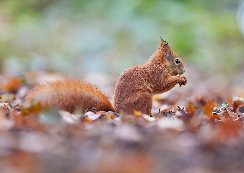 Wildlife Squirrels