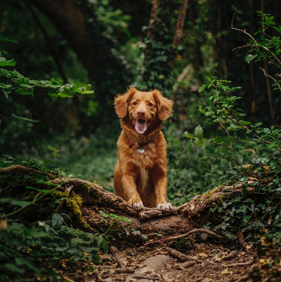 Pet Dog: Public Information