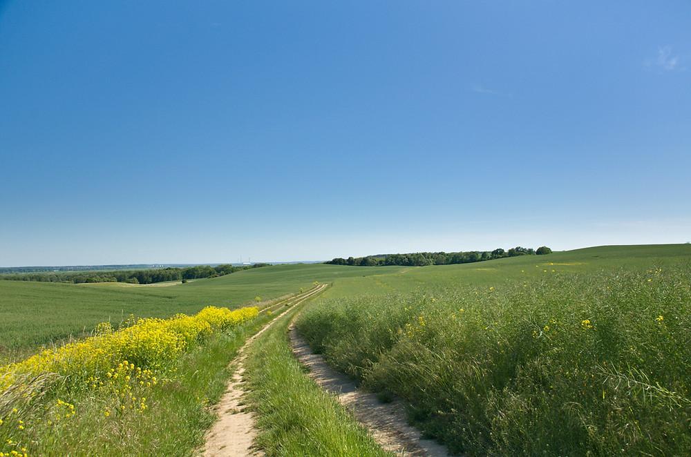 dirt road through farm field