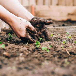 Episode 13: Gardening as Humanizing, With Katherine Leaño