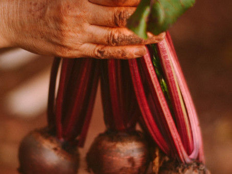 When to harvest Beetroot!