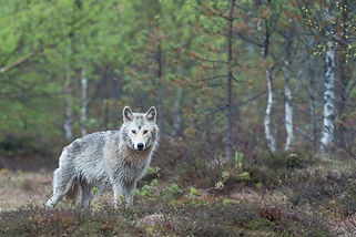 Image by Hans Veth