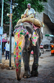A new digital elephant scale