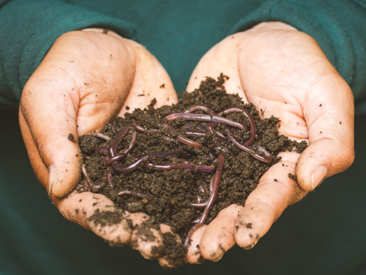 How To Start Your Own Vermicomposting Bin (And Get Incredible Soil Out Of It)