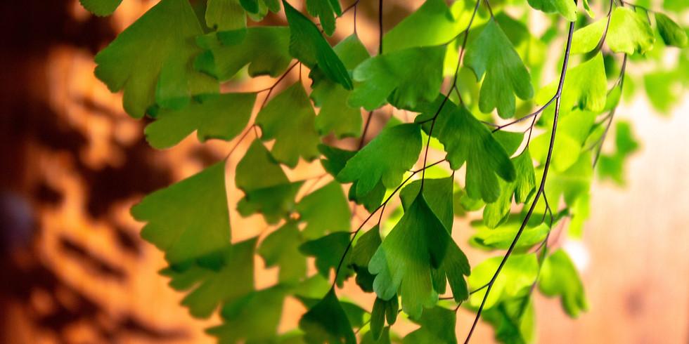 Tree San Diego's Ask the Arborist Webinar