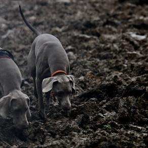Perícia com Cães de Busca Forense
