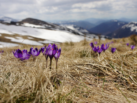 Spring into a Local Footprint
