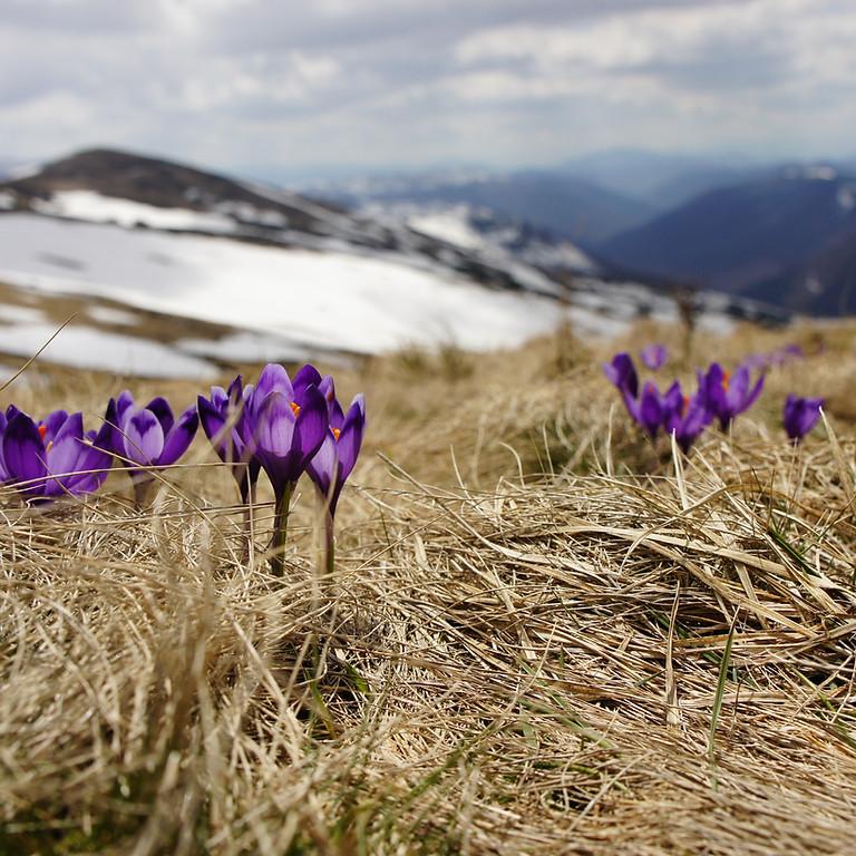 5 Day Spring Mountain Retreat