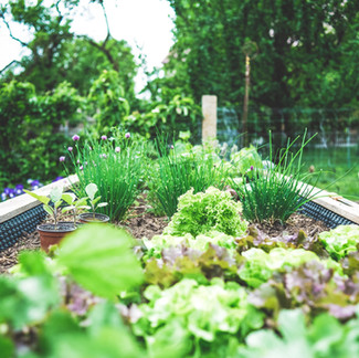 Get A Head Start on Your Spring Landscape and Gardening Projects