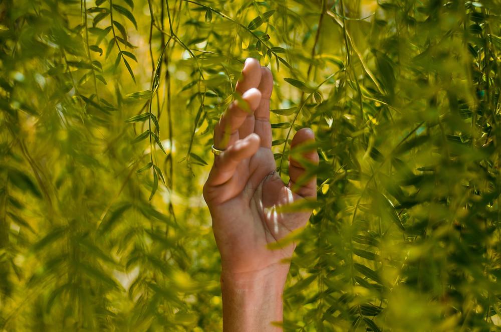 Hand running through hanging leaves