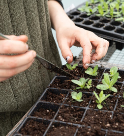Emprendimiento de agricultura vertical desea que los productos frescos y sanos sean más asequibles