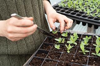 智慧種植與農莊