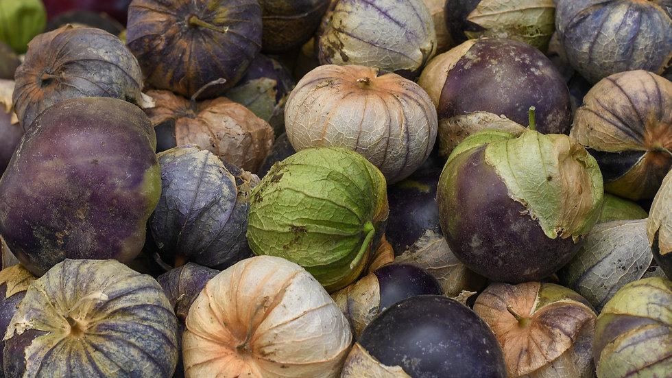 2021 Tomatillo Plant Start Pre-order