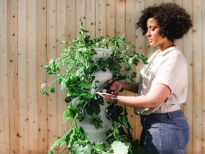 Consejos de Richard sobre el cuidado de la plantas:  PODAR TUS PLANTAS